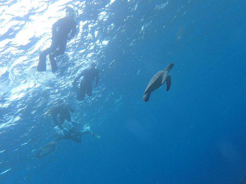 ちっこいカメと一緒に泳ぎ