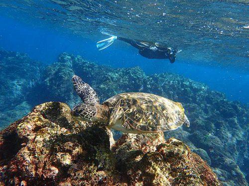 明るい海でウミガメと一緒にシュノーケリング