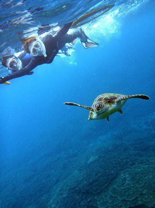 もう少し泳げばカメと一緒に泳げたり