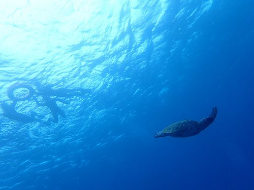 小さなウミガメが泳ぐのをみんなで見送り