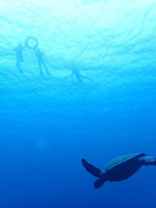 みんなの下をカメが泳いで行って