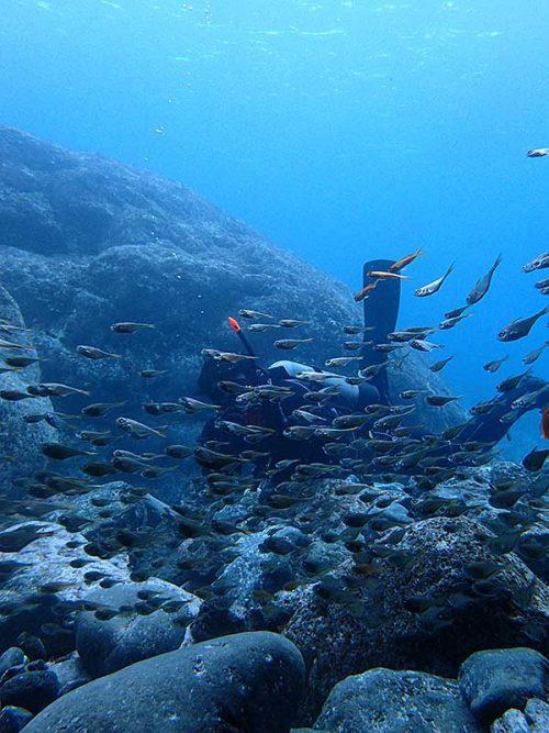 下の方に集まってた魚達とかも見てみたり
