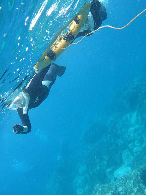 ダイバー見ながら沖へ泳いで