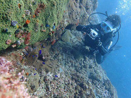 色鮮やかな海の生き物達を見て周り