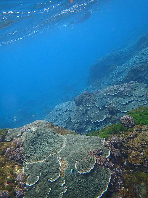 サンゴの広がる底土の海を周っていって