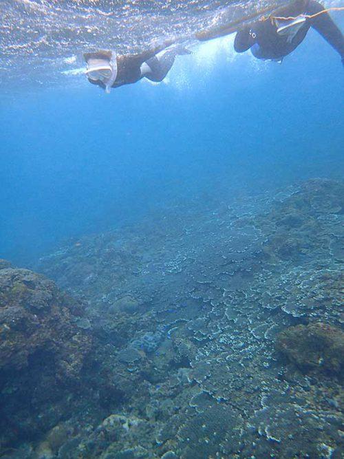 サンゴの広がるちょっと沖まで泳いで行って