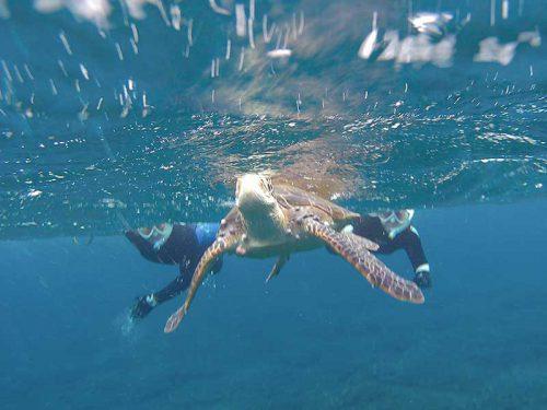 呼吸しに上がってきてたウミガメ見たり