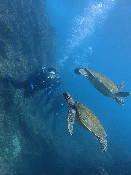目の前をウミガメ達がのんびり泳いでおりまして