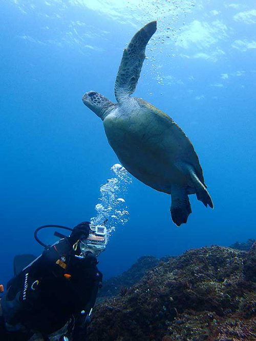 泳ぐウミガメ撮ってみて
