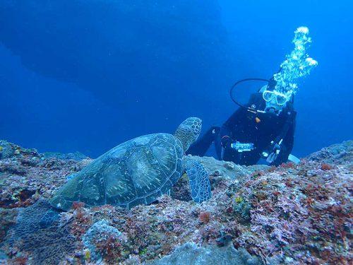 根上で食事していたアオウミガメ