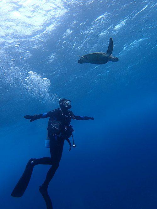 ゆっくり近づき泳ぐウミガメ眺めみたり