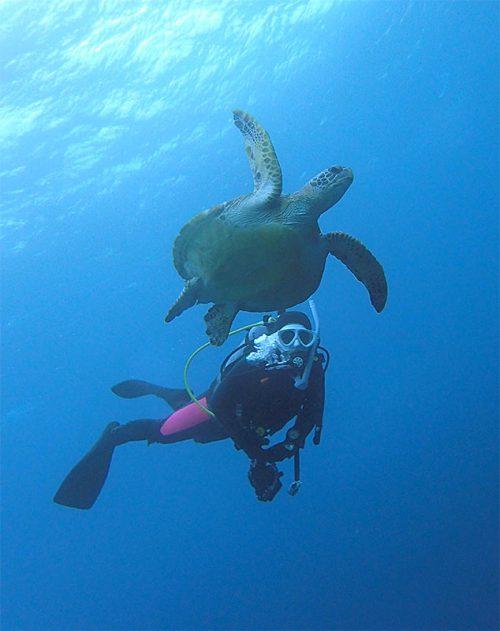 ウミガメと一緒に泳いで沖まで出て行って