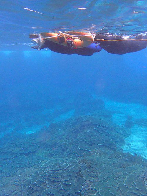 ちょっと沖まで出れば水は綺麗で暖かく