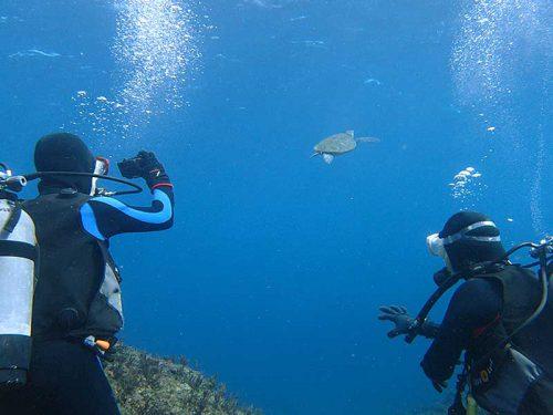 泳ぐウミガメ見送って