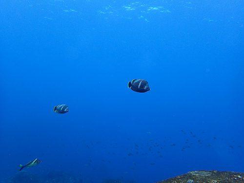ユウゼン横目に沖まで泳ぎ