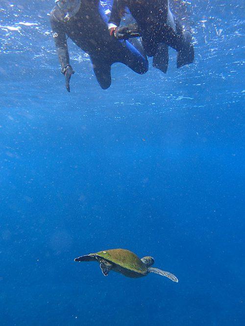 真下をウミガメ泳いで通り