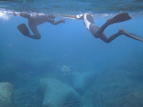 今日もウミガメ見てみたり