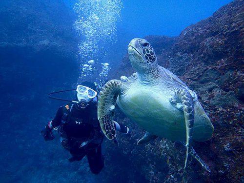 のんびりしていたウミガメ見つけ