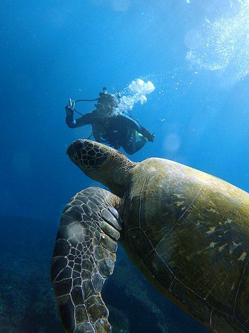 八重根でカメと一緒に泳ぎ