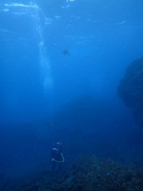 ウミガメ上を泳いで通り