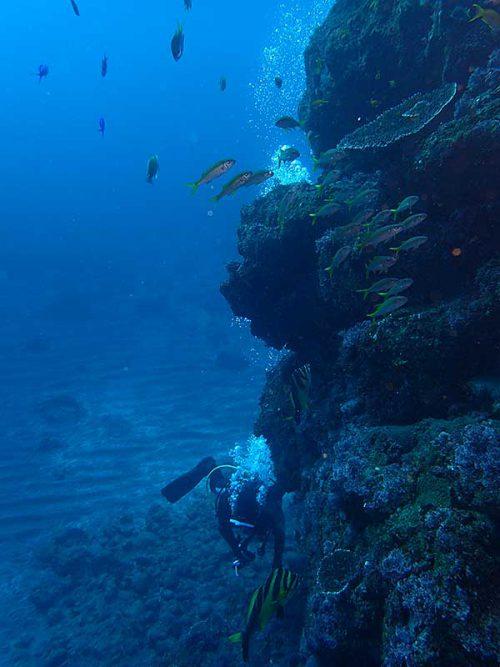 魚を見ながら壁沿い周り