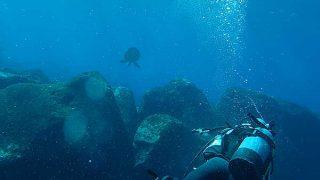 爽やかな青空続く八丈島、穏やかになってたナズマドで【ダイビング】