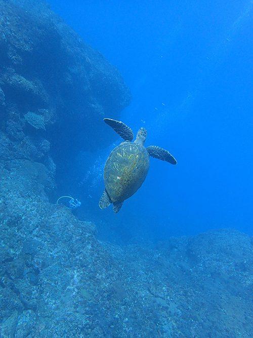 アオウミガメ見たり