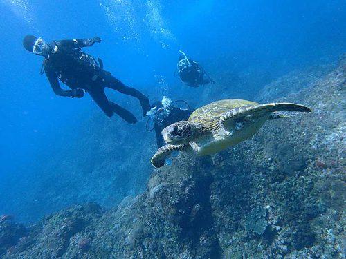 ウミガメと一緒に沖まで泳いで出て行って