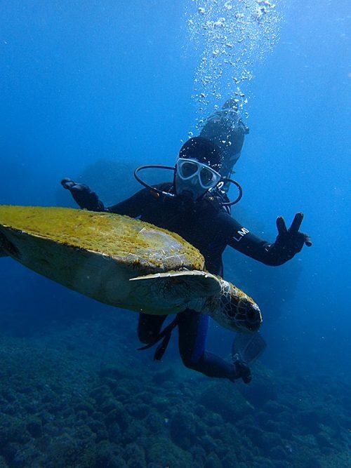 目の前ウミガメ泳いで通り