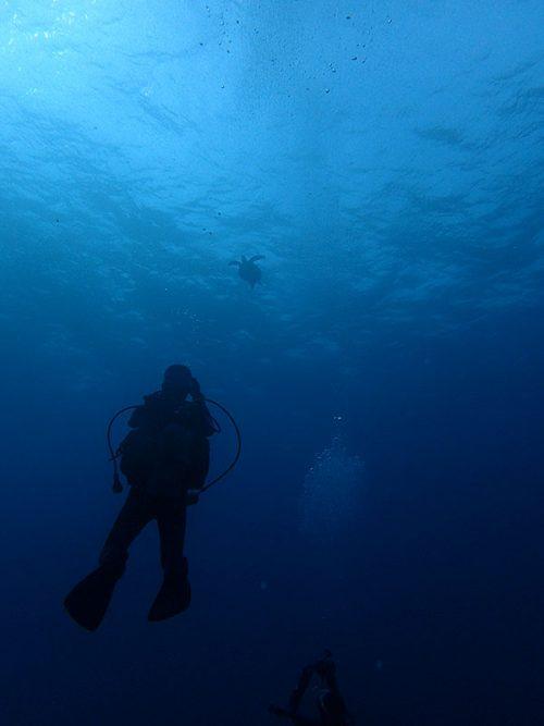 下からウミガメ撮ってみたり