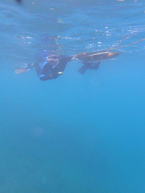 ウミガメ探しはするものの