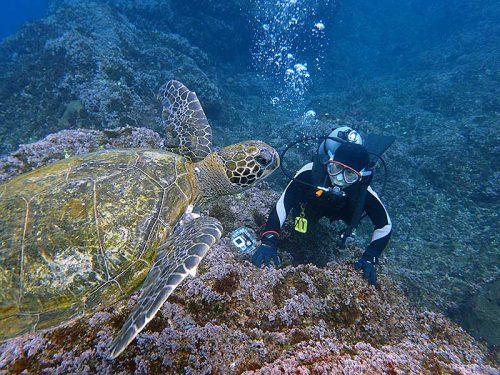 沖では泳ぐウミガメ見てみたり