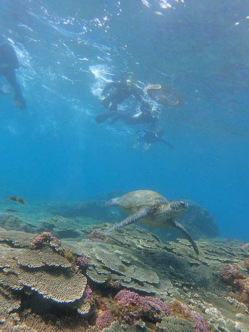 少し泳ぐとすぐにウミガメおりまして
