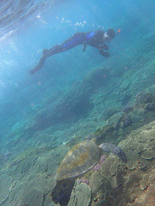 近くでウミガメ撮ったりしたり