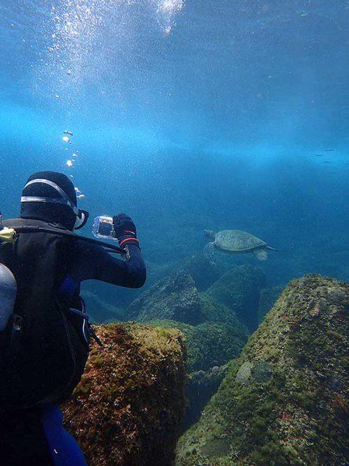 泳ぎ去るウミガメ撮ってみたりして