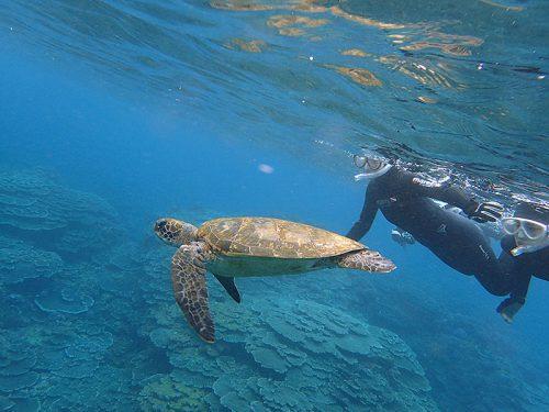 カメと一緒に泳いでみたり