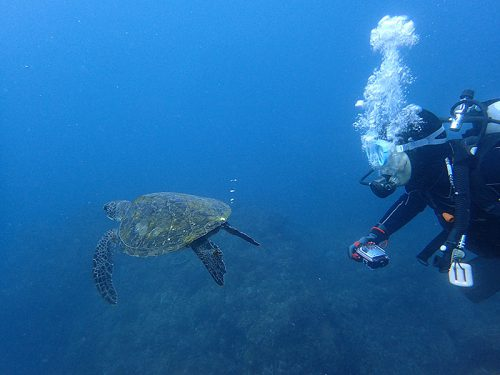 おしりからポコポコ泡でてたアオウミガメ