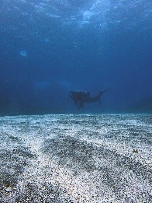 サンゴの間の砂地も巡り