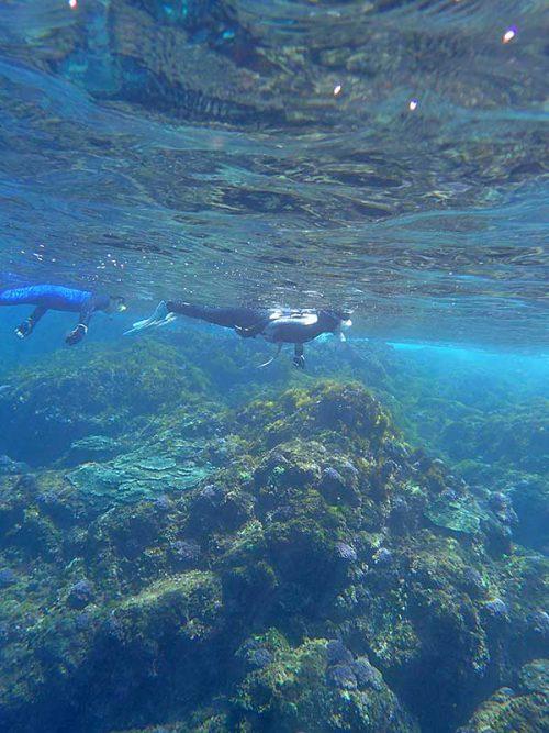 魚を見ながらグルッと海を周りつつ