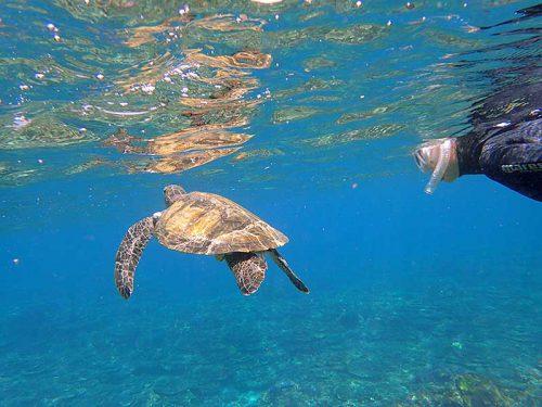 近くでウミガメじっくり眺め