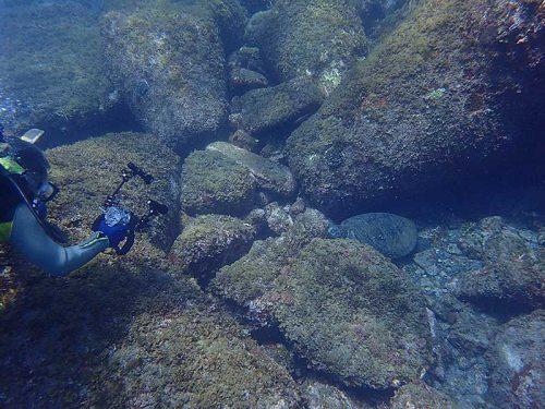 岩陰で休んでたアオウミガメ