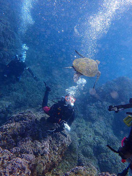 下からウミガメ見てみたり