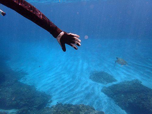 遠くをウミガメ泳いでて