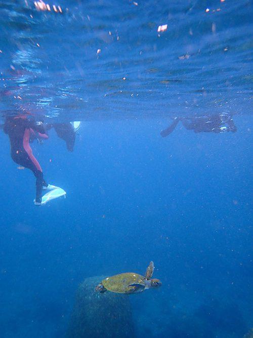みんなの下をウミガメ泳ぎ