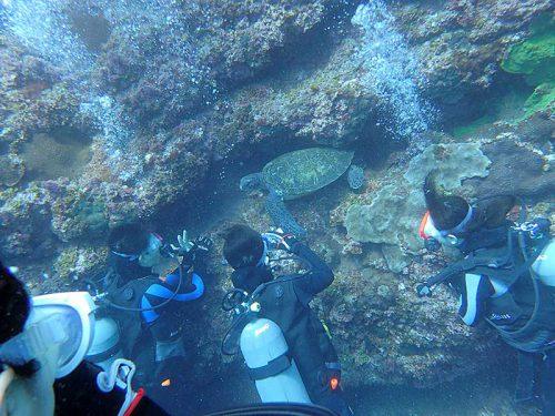 岩の隙間で休むウミガメ見つけ
