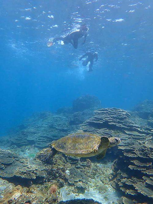 ウミガメ見ながら一緒に泳ぎ