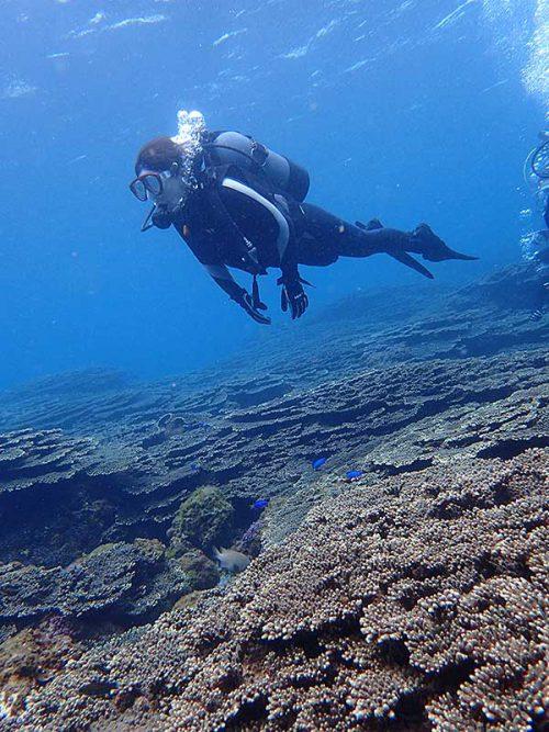 サンゴの広がる底土の海を泳いで周り