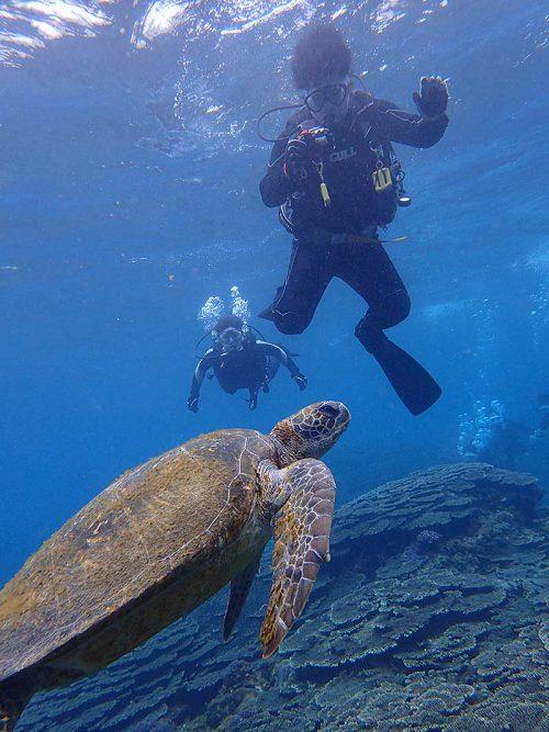 近くでウミガメ見た見たり