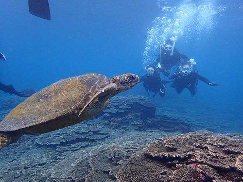 サンゴのところでのんびりしていたアオウミガメ