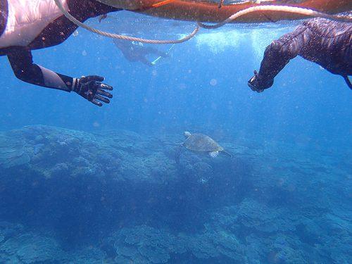 ウミガメと一緒に底土の海を泳いで周り